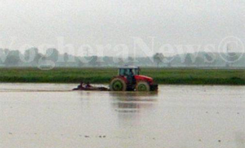 CASSOLNOVO 25/05/2015: Ruba le paratie delle risaie. Identificato e denunciato agricoltore