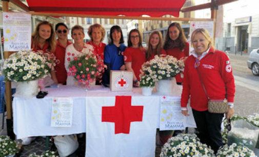 VOGHERA 12/05/2015: Le margherite per le mamme. Iniziativa della Croce Rossa in Piazza Duomo