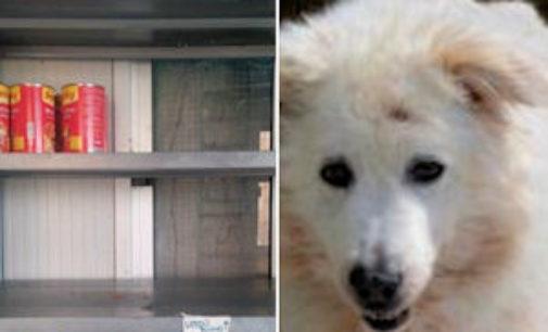 VOGHERA 28/05/2015: Sos cibo umido per cani al rifugio Enpa di Voghera
