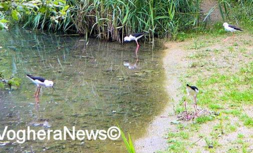 PROVINCIA 12/04/2021: A rischio il mantenimento degli animali dell'Oasi Sant'Alessio. L'appello. Adottate un animale aderendo alla raccolta fondi su GoFundMe