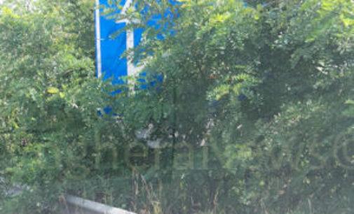 """VOGHERA 04/08/2015: La vegetazione prende il sopravvento. Effetto """"post atomico"""" sulla tangenziale"""