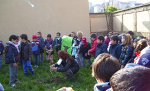 VOGHERA 18/11/2015: Anche in città la Festa dell'Albero. Nuovi alberi saranno piantati in tutte le scuole