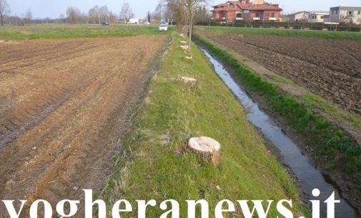 REGIONE 27/05/2020: Più controlli sui tagli boschivi. Nuova delibera approvata dalla Giunta regionale lombarda