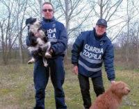 PAVIA 18/02/2016: Cucciolo di cane chiede i soccorsi per il papà in difficoltà. Abbaia per ore poi guida le Guardie fino al cane ferito