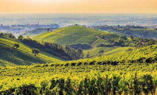 TORRAZZA COSTE 07/02/2016: Il Pinot nero si racconta sui social. Il Consorzio lancia #weloveoltrepo per raccontare al mondo le colline del vino e del gusto