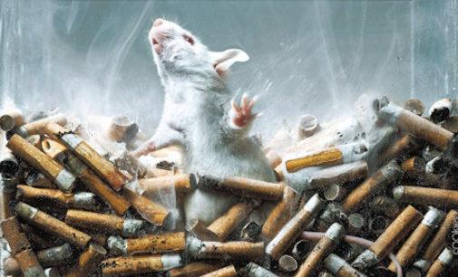 VOGHERA 02/03/2016: Anche in città nel fine settimana si può firmare contro i test su fumo e droghe fatti sugli animali e sostenere i metodi di ricerca alternativi