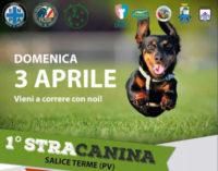 """SALICE TERME 15/03/2016: Domenica nel parco la """"Stracanina"""" corsa a 6 zampe (umani e cani corrono insieme)"""