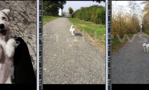 PONTE NIZZA 29/04/2016: Due cani avvelenati sulla ex Voghera-Varzi. Uno è morto. La Lav lancia l'allarme. Fate sempre molta attenzione