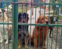 MONTEBELLO 27/04/2016: Presunta truffa animalista. Uomo multato per il (presunto) maltrattamento del cane. L'Enpa indaga su uno strano episodio e invita a fare attenzione