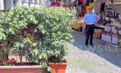 VOGHERA 07/06/2016: Le Regina sceglie piazza Duomo. Sciame di api si posa nelle piante della pizzeria