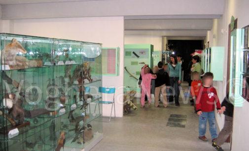 VOGHERA 21/06/2016: Un Murales fatto dai bambini abbellirà l'ingresso del Museo di Scienze naturali