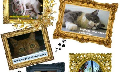 """VOGHERA 12/11/2016: Esposizione di gatti. Oggi e domani al Gattile Enpa. I mici: """"Siamo i gatti più super del mondo"""""""