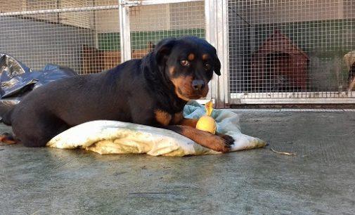 """VOGHERA 03/01/2017: """"Mega emergenza"""" coperte al rifugio. Cani al freddo. L'appello dell'Enpa"""