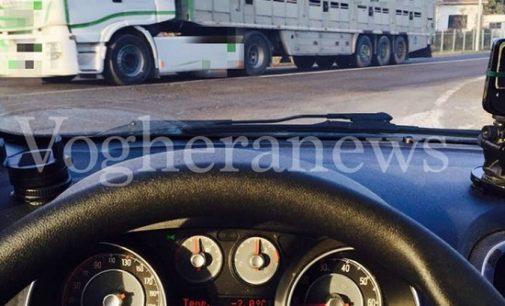 PAVIA BRESSANA VOGHERA 18/1/2017: Animali trasportati su camion semi aperti con temperature sotto lo zero. La piaga anche nella nostra provincia. Intanto domenica c'è la benedizione degli animali…