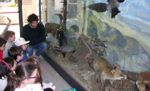 VOGHERA 03/07/2020: Tornano le pause pranzo al Museo di Scienze Naturali