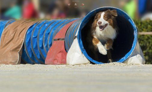 """SALICE TERME 26/07/2017: Agility dog. Per 4 giorni la località termale sarà un """"villaggio globale della cinofilia"""". Previsti 900 concorrenti da 40 Paesi"""