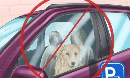 """VIGEVANO 24/07/2017: Cani lasciati nella macchina """"forno"""" parcheggiata sotto al sole. Carabinieri di quartiere denunciano 55enne"""
