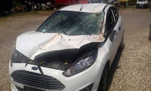 RIVANAZZANO 19/07/2017: Auto centra in pieno un albero caduto sulla carreggiata