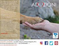 """VIDIGULFO PAVIA 15/11/2017: La """"Squadra 4 Zampe"""" cerca aiuto per dare una casa ai cani soli"""