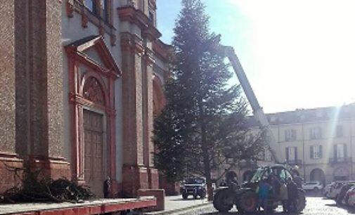 VOGHERA 04/12/2017: Natale. E' arrivato anche il grande albero di piazza Duomo