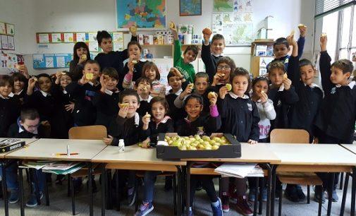 """VOGHERA 11/12/2017: Più frutta e verdura nelle scuole. Alla Primaria De Amicis parte la distribuzione """"per un'educazione alimentare sana e corretta"""""""