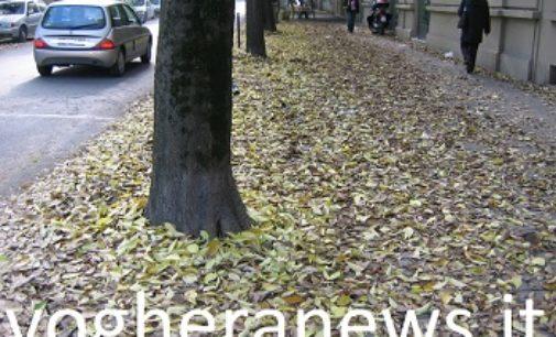 VOGHERA 01/12/2017: Troppe foglie a terra. L'Italia del Rispetto sollecita il Comune