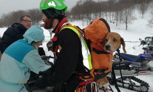 BRALLO DI PREGOLA 05/03/2018: Due cani nel crepaccio. Li salvano i Vigili del fuoco di Varzi e i volontari del Soccorso alpino