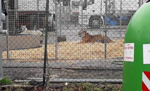 VOGHERA 14/03/2018: L'Enpa contro il Circo (con animali) arrivato in città. L'associazione invita la cittadinanza a boicottare lo spettacolo e a mobilitarsi