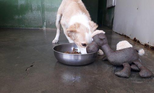 """MONTEBELLO 07/04/2018: Oggi e domani al Centro Commerciale raccolta cibo dell'Enpa per i cani e i gatti. Ecco cosa serve! Intanto c'è chi incredibilmente """"dona"""" al canile pane ammuffito"""