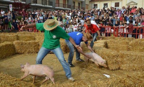 PAVIA 10/05/2018: Sagra dell'asparago a Cilavegna. La LAV diffida il Sindaco affinchè interrompa l'uso dei maiali durate la manifestazione