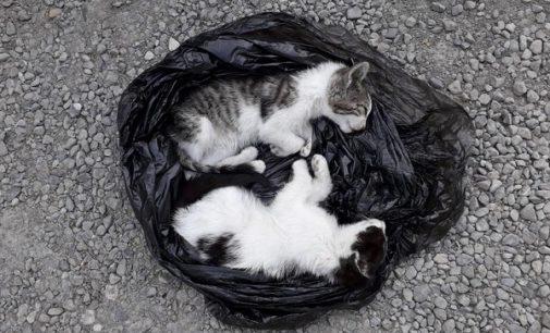 VOGHERA 21/05/2018: Gettati da un'auto (piccola di colore grigio) in corsa. Due gattini morti stamattina in strada Valle. Appello agli abitanti della zona