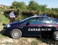 """ROVESCALA 27/09/2018: Carabinieri nelle vigne contro il """"caporalato"""". Arresti e denunce in 3 Comuni"""