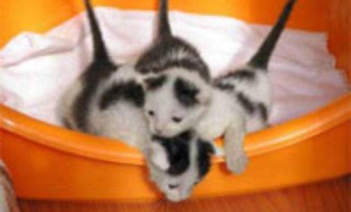 """MORTARA 19/02/2019: Lettere. A Mortara l'Expo felina e dei rettili. Le proteste. """"Animali ergastolani. Creano il culto della razza quando ci sono gatti da adottare"""""""