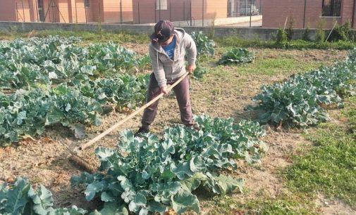 VOGHERA 27/02/2019: Agricoltura sociale. Finanziato il progetto per la realizzazione (anche a Voghera) di un distretto di economia solidale