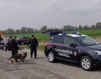 VIDIGULFO 04/04/2019: Operazione antidroga nelle campagne pavesi. Carabinieri sgominano una rete di spacciatori magrebini