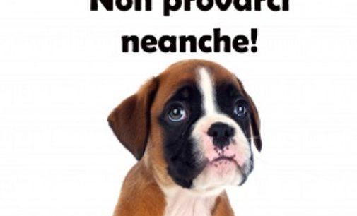VOGHERA 13/06/2019: Non abbandonate gli animali. Non provateci neanche!. La campagna 2019 di Asm
