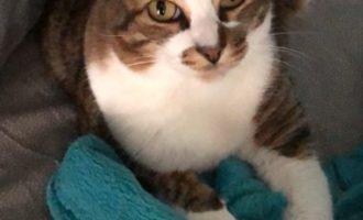 VOGHERA 15/06/2019: AGGIORNAMENTO.  Il gatto Ben è stati ritrovato