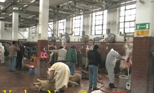 PAVIA VOGHERA 08/08/2019: Animali sgozzati. Petizione del Partito Animalista Italiano contro la macellazione rituale
