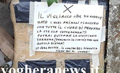 """VOGHERA 19/09/2019: Nonno gattaro disperato per la morte di due randagi pubblica un messaggio. """"Ti auguro di provare la stessa sofferenza"""""""