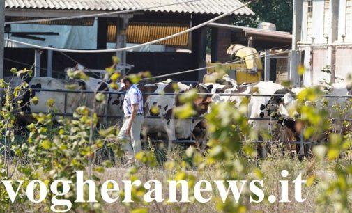 ARENA PO 12/09/2019. Incidente sul lavoro nell'azienda agricola. Confermata la morte di 4 operai