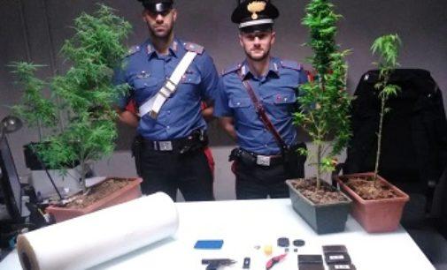 SANNAZZARO DE' BURGONDI 01/10/2019: Arrestata coppia di spacciatori. In casa avevano 500 gr di hashish, piante di marijuana e una pistola