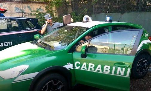 CORNALE BASTIDA 15/10/2019: Inquinamento del torrente Curone. I Carabinieri Forestali a caccia di chi ha sversato gasolio agricolo