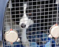 Portare un animale in aereo: come fare e cosa bisogna sapere