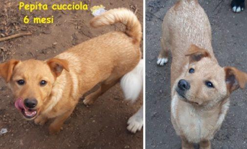VOGHERA 07/01/2020: Appello dall'Aquila. Pepita e Pollon abbandonati sull'autostrada cercano casa