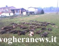 PAVIA VOGHERA 08/11/2020: Coronavirus. Il lockdown salva gli animali. Stop alla caccia in Lombardia