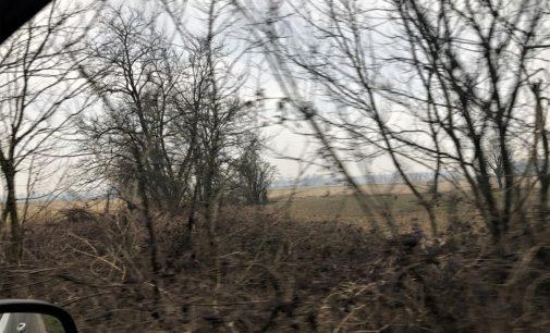 PAVESE OLTREPO 12/02/2020: Alberi selvatici. Salvarli significa salvare anche gli animali che li abitano