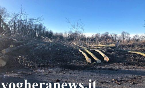 PAVIA ZECCONE 04/02/2020: Senza sosta la sparizione degli alberi selvatici nella campagna pavese. Sempre più povero l'habitat per gli uccelli