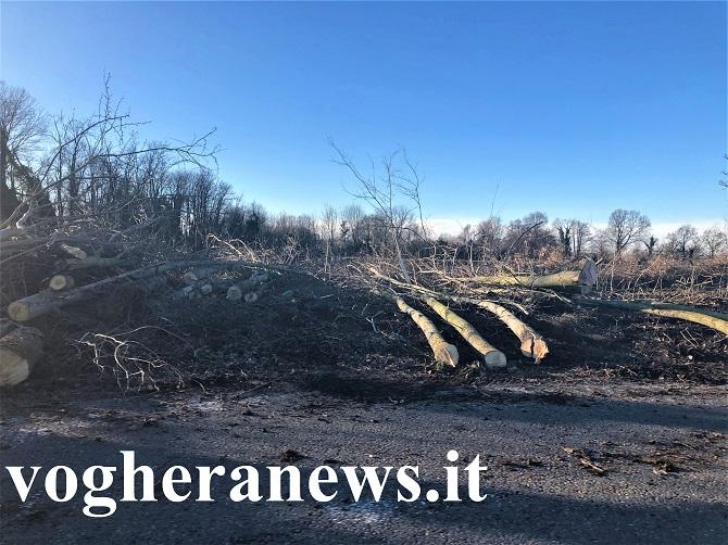 alberi tagliati zeccone vigentina 600