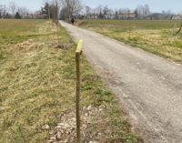CODEVILLA 17/02/2020: Già vandalizzati gli alberi piantati sulla GreenWay. Il Comune dà la caccia ai responsabili. Intanto serve una mobilitazione in difesa degli alberi selvatici
