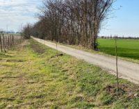 """CODEVILLA 13/02/2020: Il Comune pianta alberi (lungo la GreenWay). """"Produciamo ossigeno"""""""